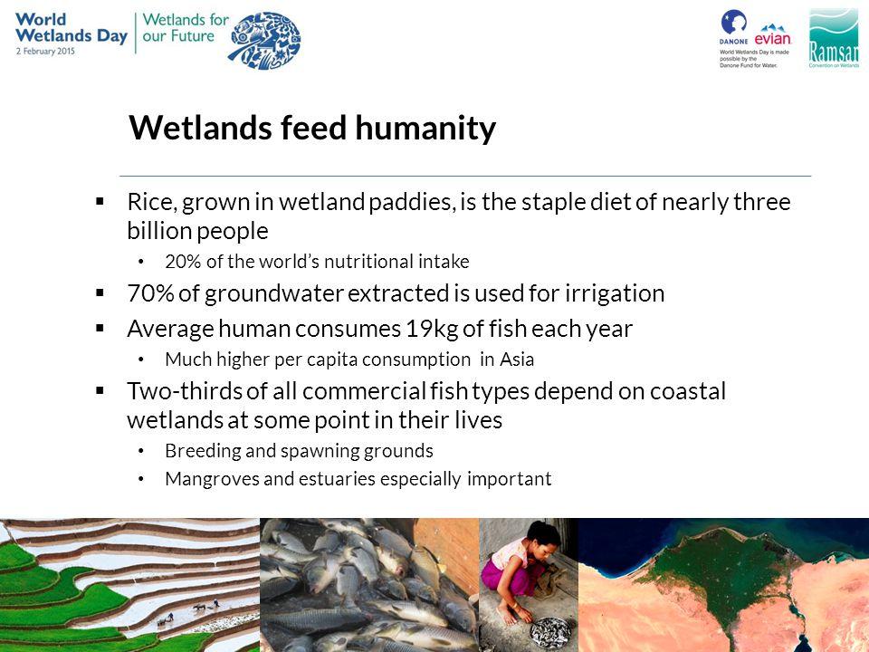 Wetlands feed humanity
