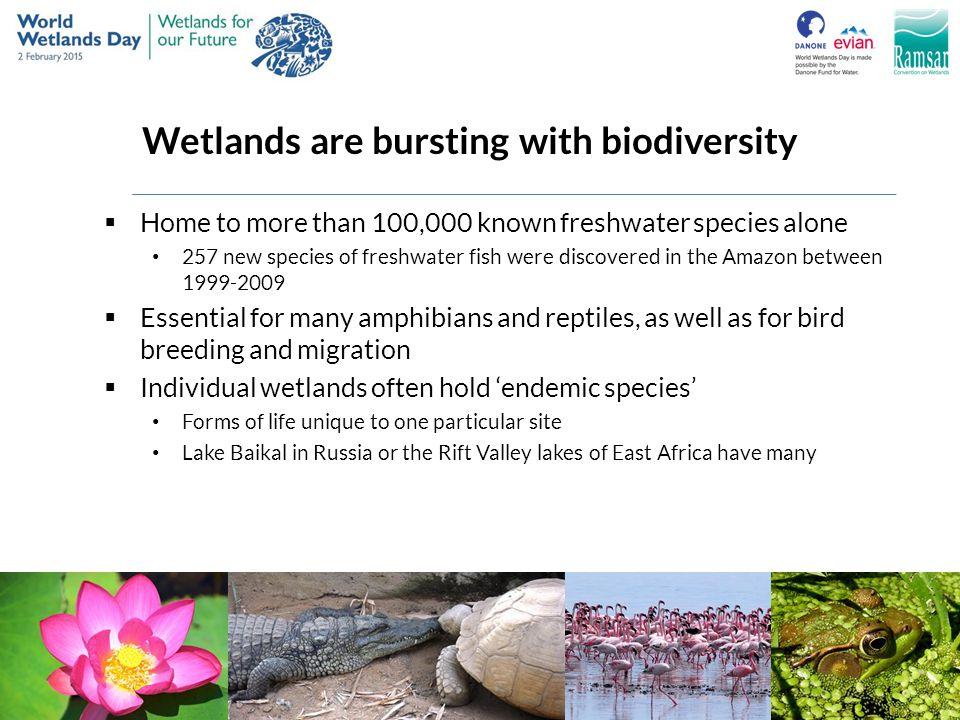 Wetlands are bursting with biodiversity