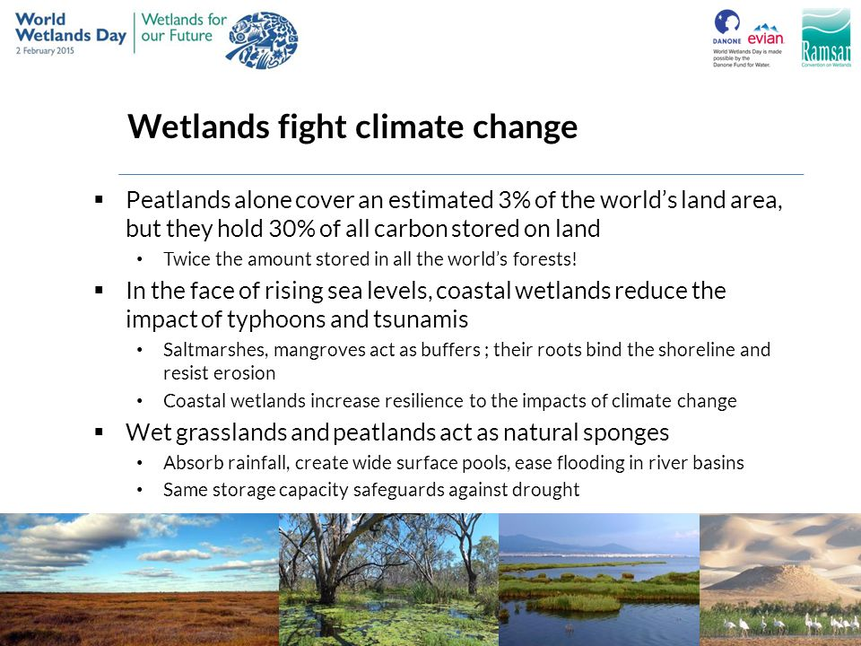 Wetlands fight climate change