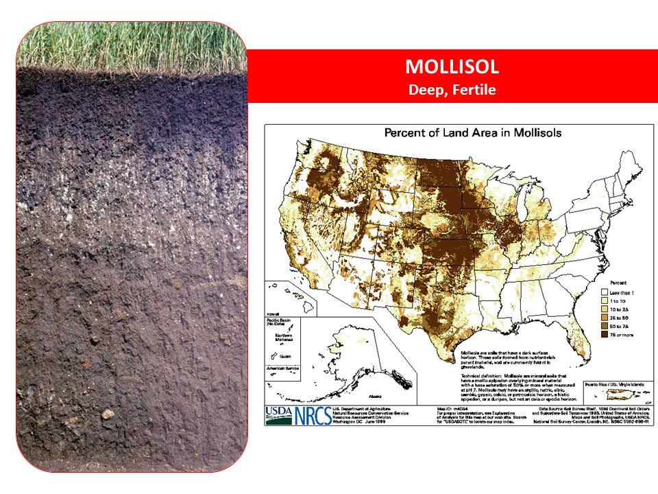 MOLLISOL Deep, Fertile Mollisols - grassland soils