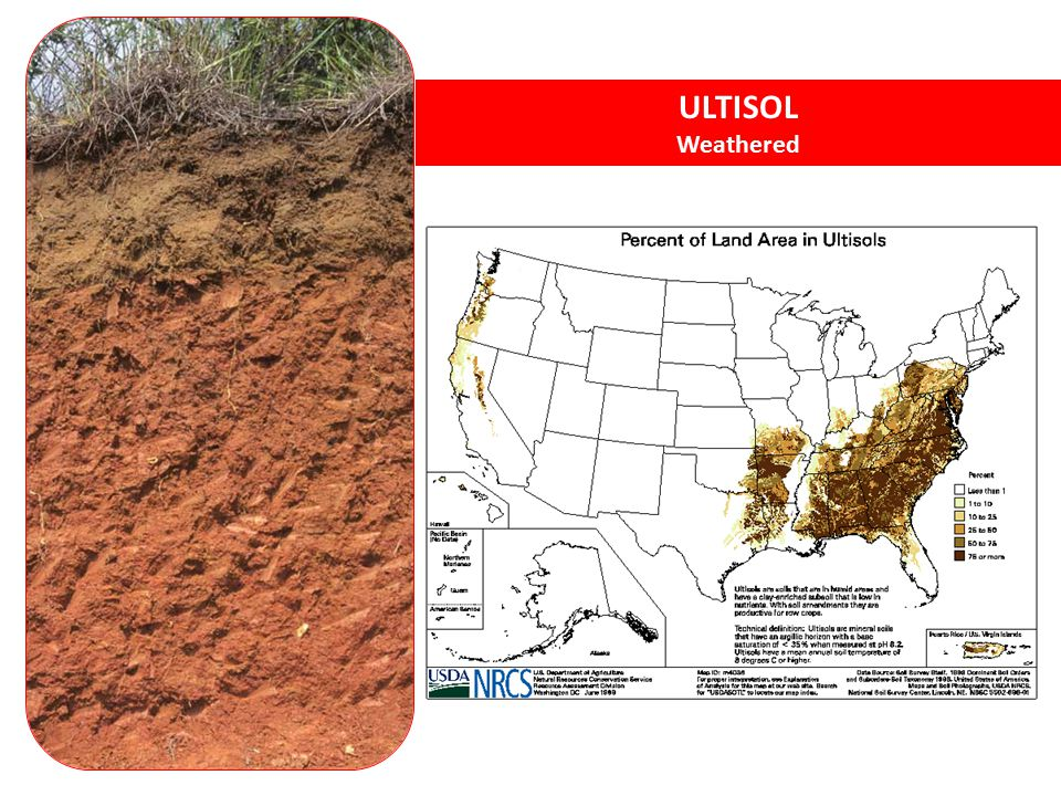 ULTISOL Weathered Ultisols – acidic, strongly leached, older soils