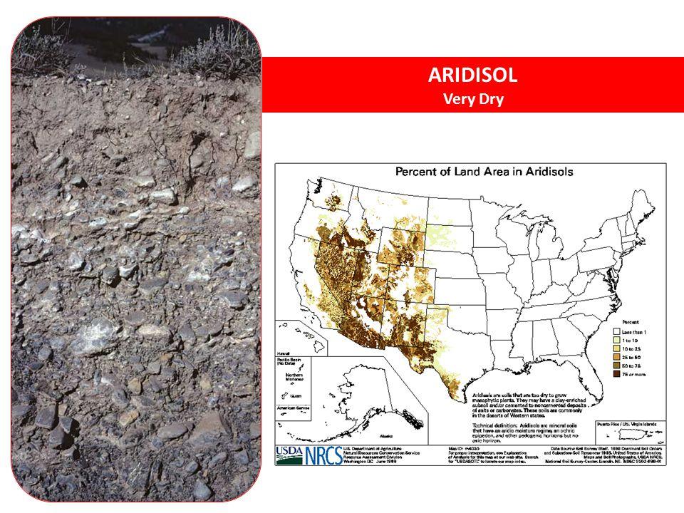 ARIDISOL Very Dry Aridisols – desert soils