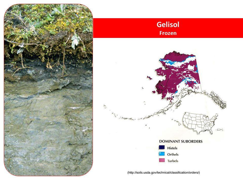 Gelisol Frozen Gelisols - soils with permafrost