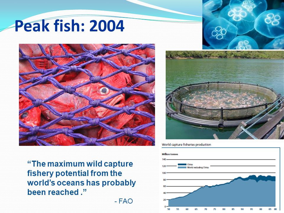 Peak fish: 2004 Fisheries scientists report a third of world fisheries have already collapsed and another 40 per cent are in trouble.