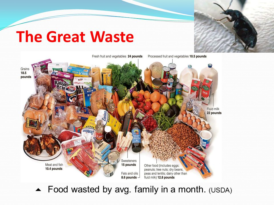The Great Waste 5 Food wasted by avg. family in a month. (USDA)