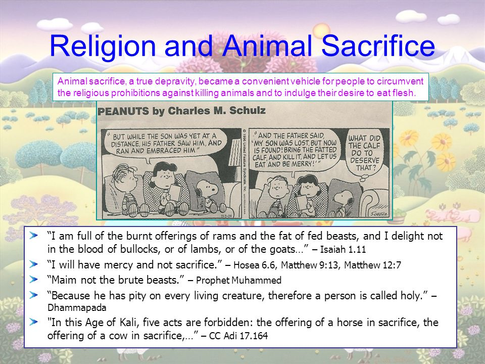 Religion and Animal Sacrifice
