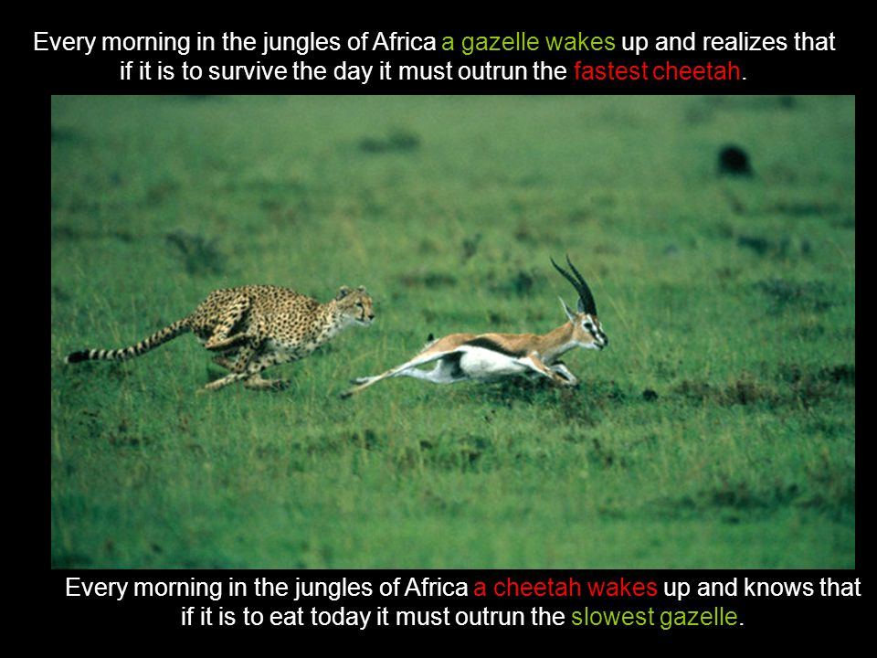 Every morning in the jungles of Africa a gazelle wakes up and realizes that if it is to survive the day it must outrun the fastest cheetah.