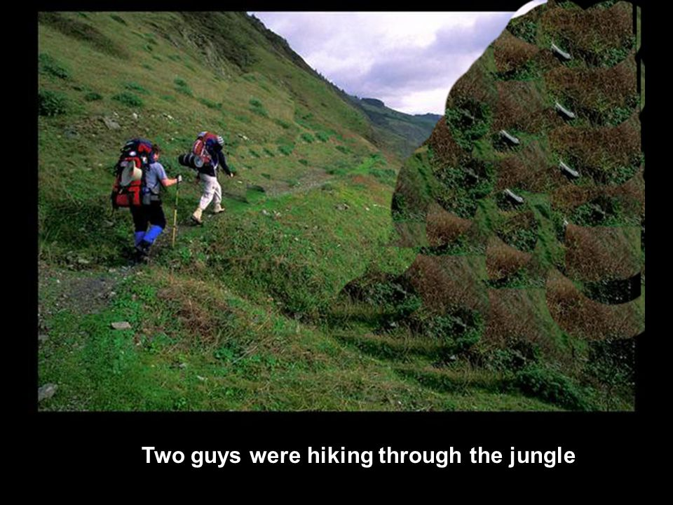 Two guys were hiking through the jungle