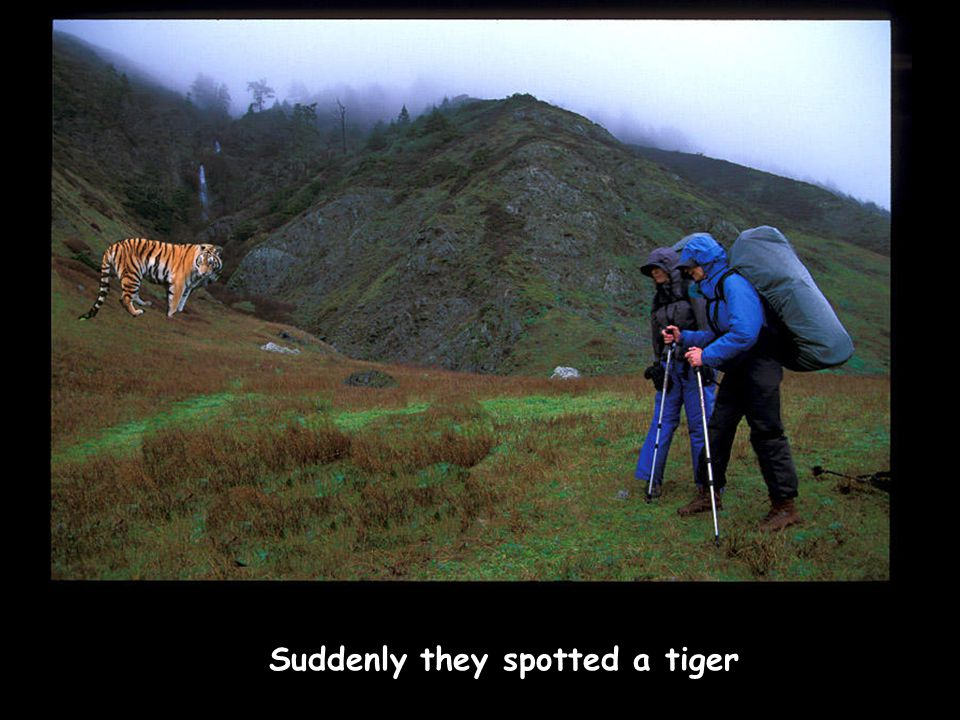 Suddenly they spotted a tiger