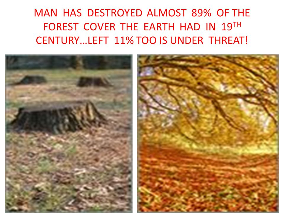 MAN HAS DESTROYED ALMOST 89% OF THE FOREST COVER THE EARTH HAD IN 19TH CENTURY…LEFT 11% TOO IS UNDER THREAT!