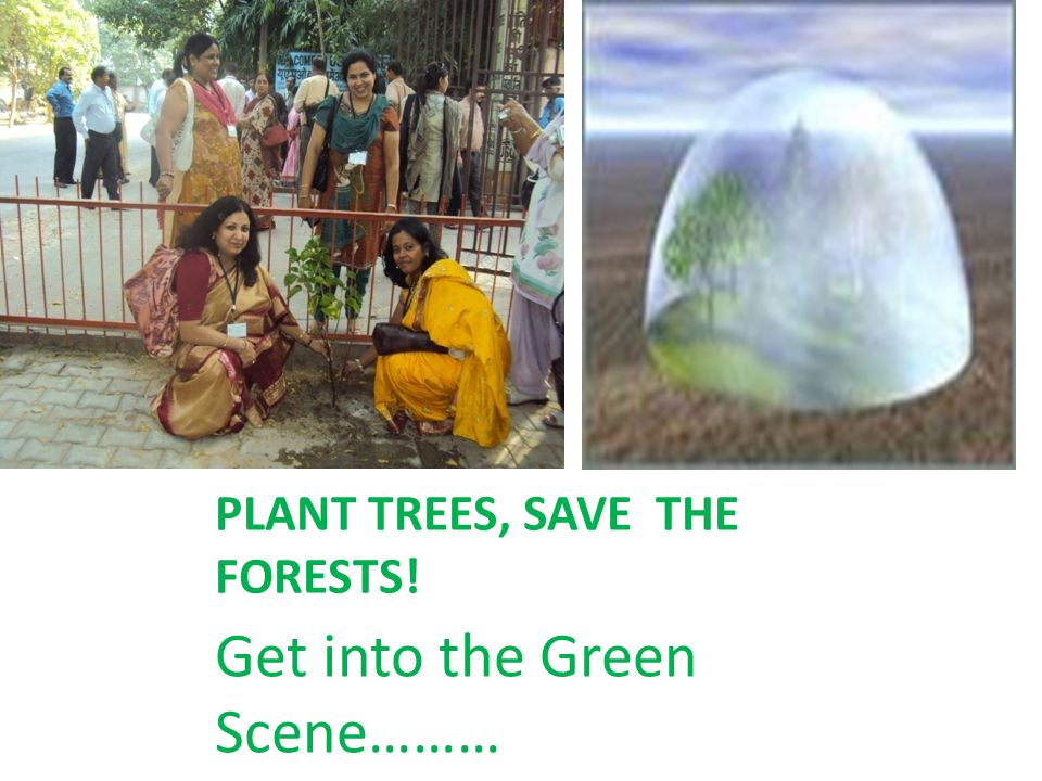 PLANT TREES, SAVE THE FORESTS!