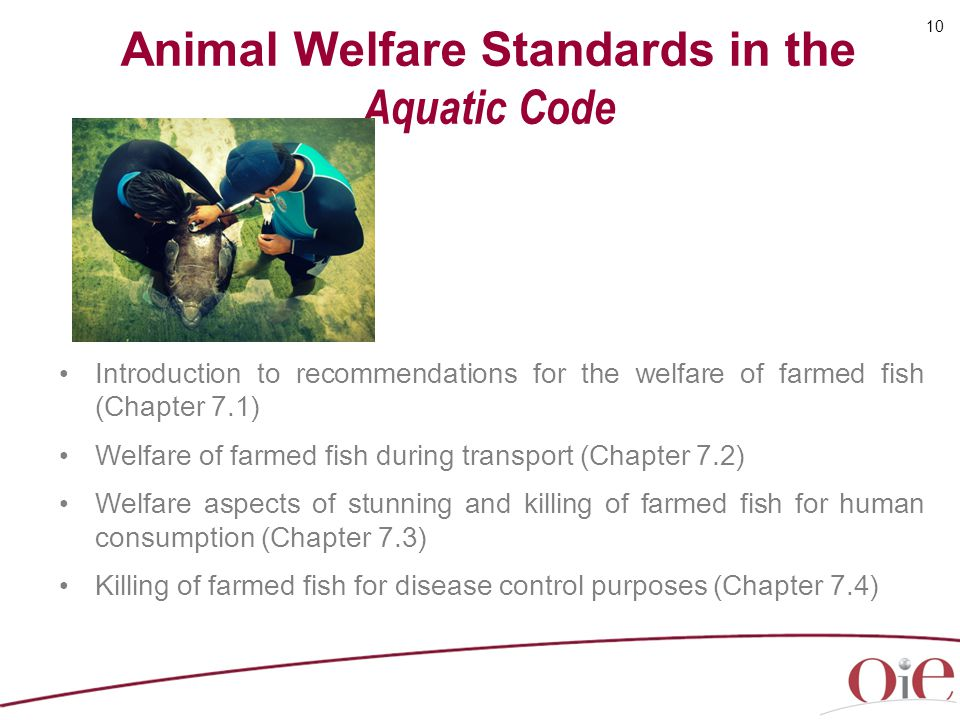 Animal Welfare Standards in the Aquatic Code