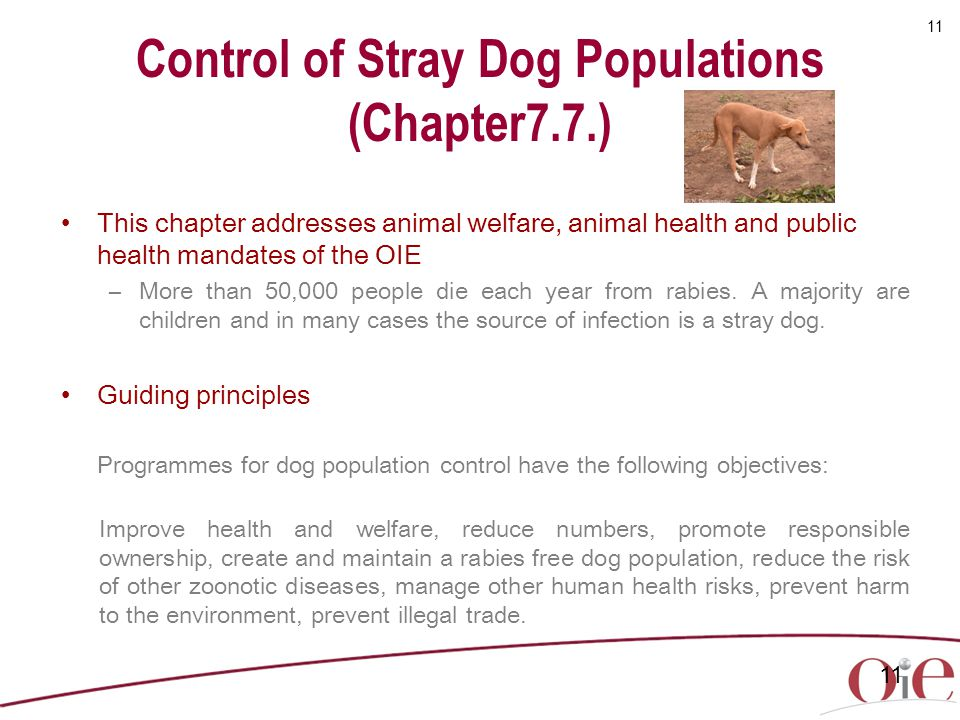 Control of Stray Dog Populations (Chapter7.7.)