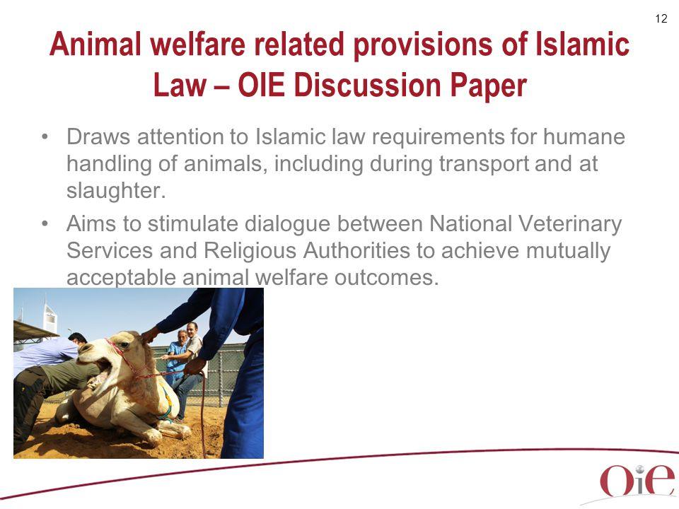 Animal welfare related provisions of Islamic Law – OIE Discussion Paper