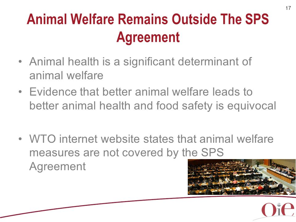 Animal Welfare Remains Outside The SPS Agreement
