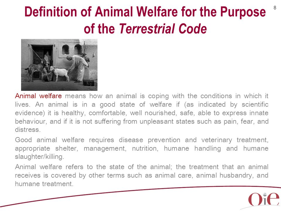 Definition of Animal Welfare for the Purpose of the Terrestrial Code