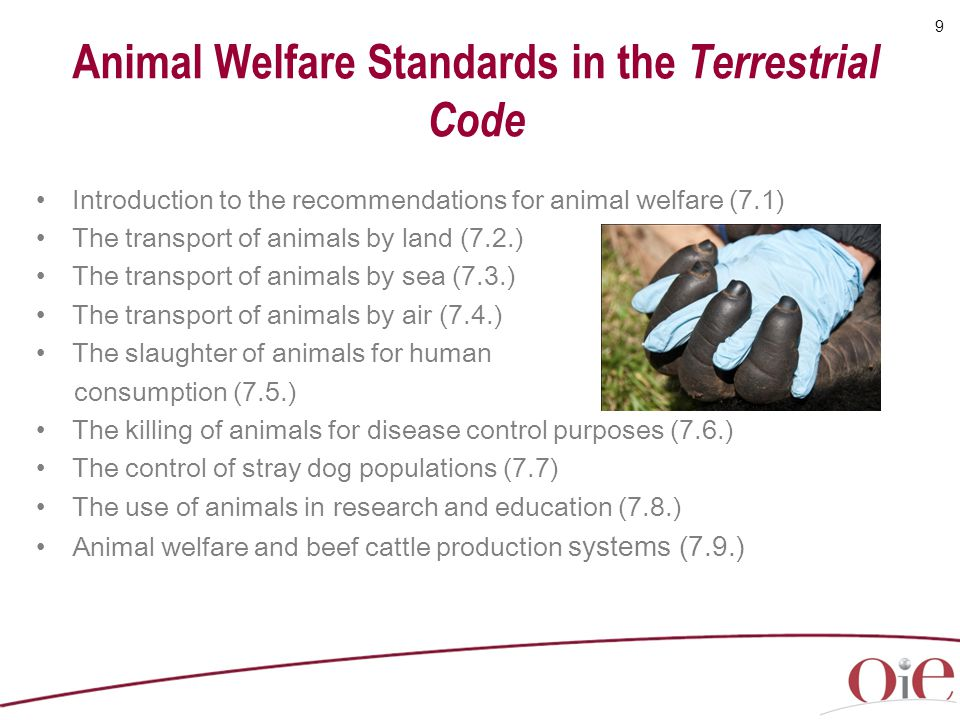 Animal Welfare Standards in the Terrestrial Code