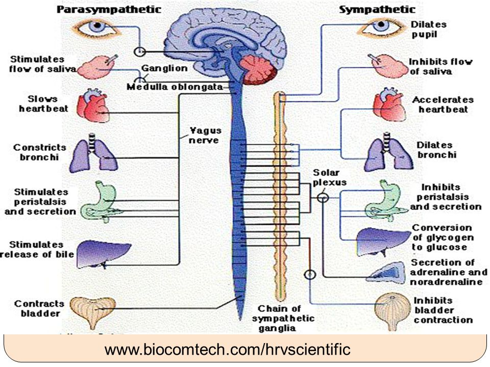 www.biocomtech.com/hrvscientific 20