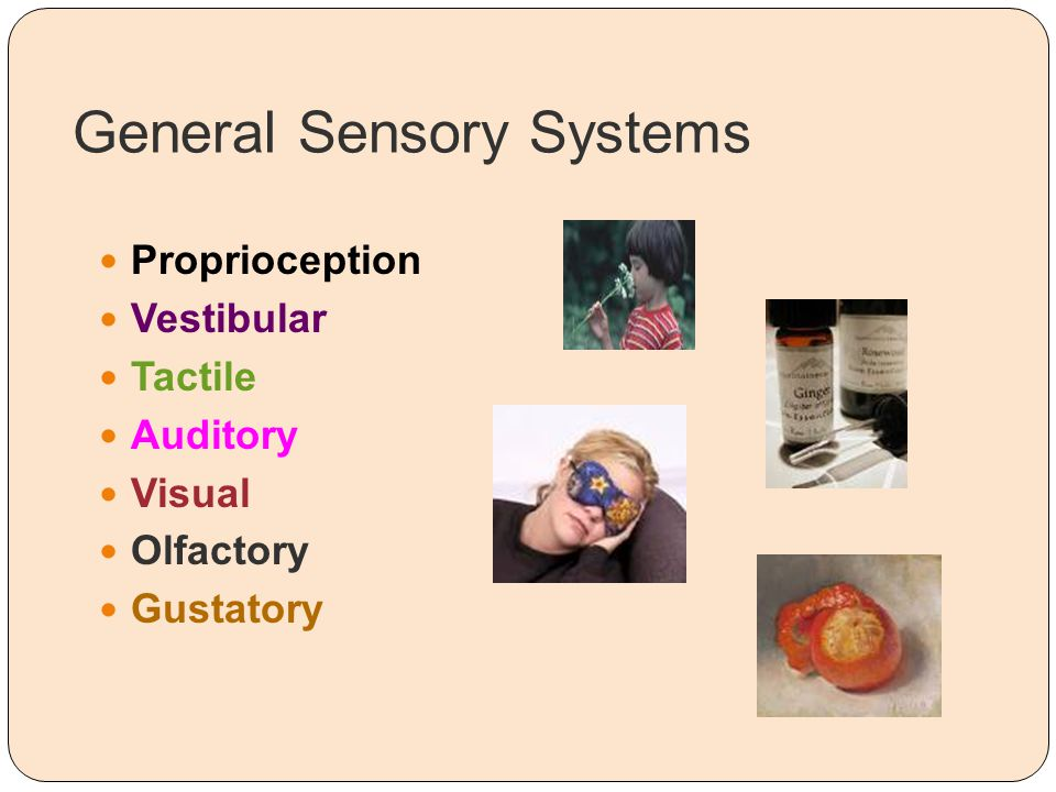 General Sensory Systems