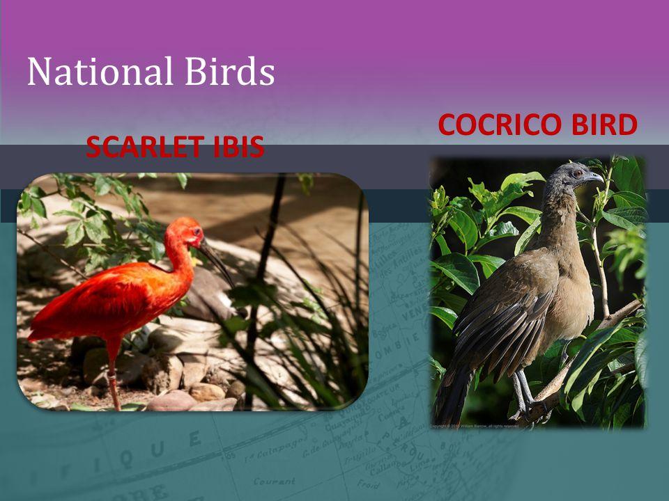 National Birds COCRICO BIRD SCARLET IBIS