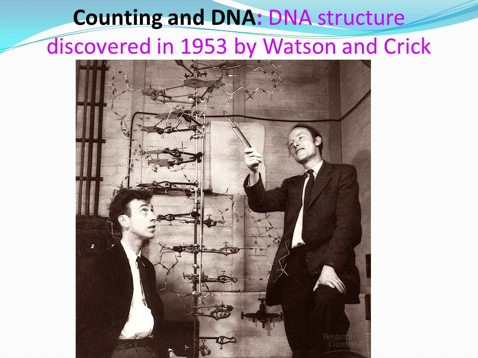 Counting and DNA: DNA structure discovered in 1953 by Watson and Crick