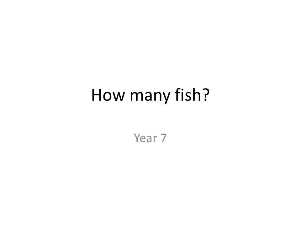How many fish Year 7