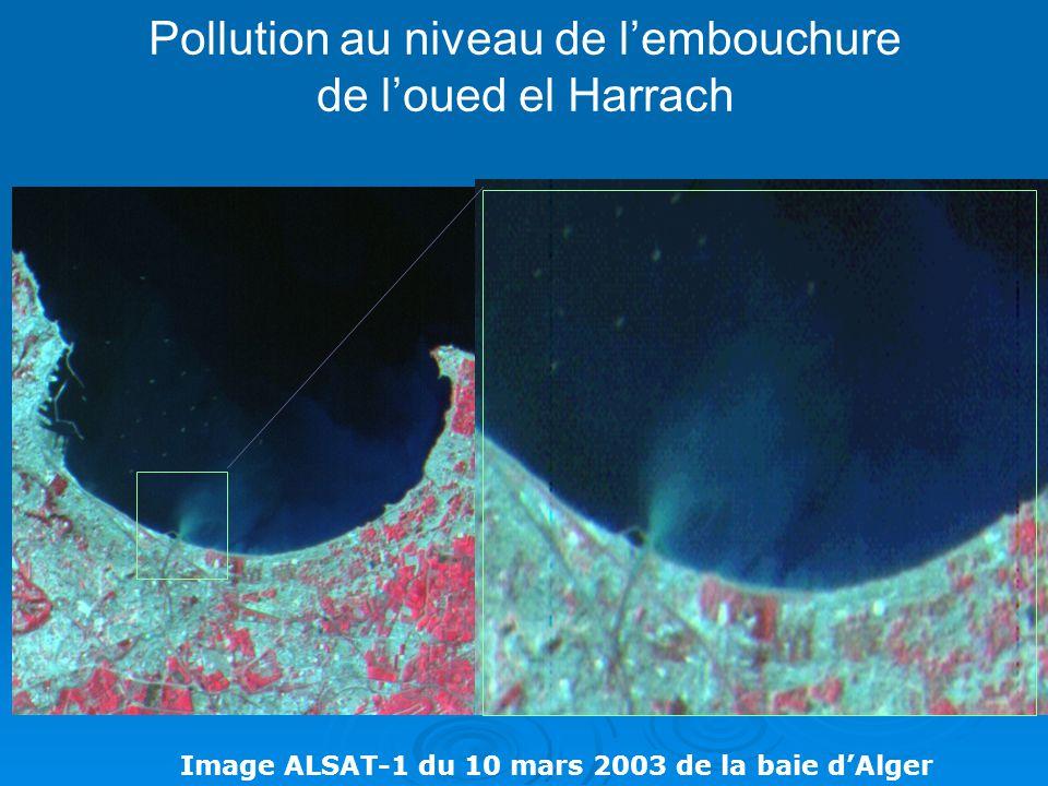 Pollution au niveau de l'embouchure de l'oued el Harrach