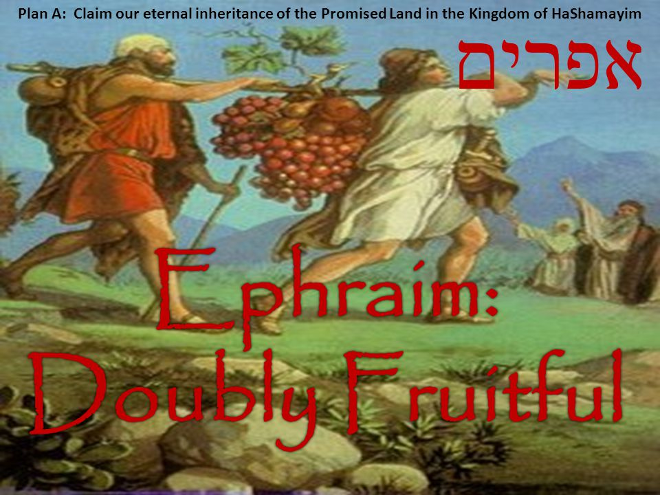 Ephraim: Doubly Fruitful
