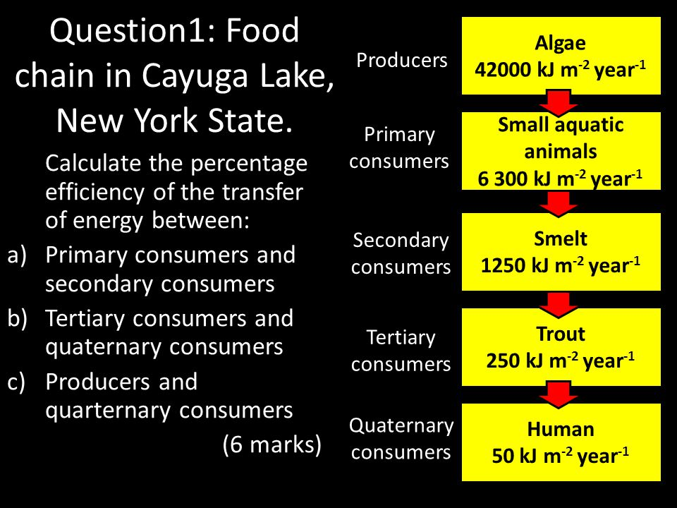 Question1: Food chain in Cayuga Lake, New York State.