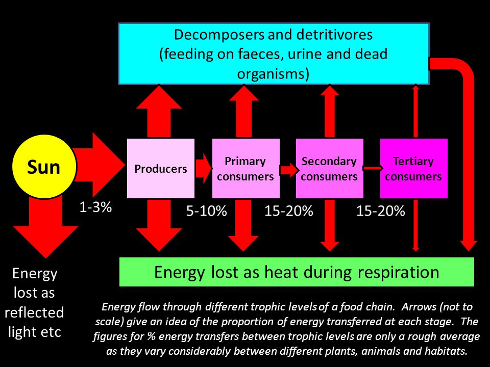 Sun Energy lost as heat during respiration