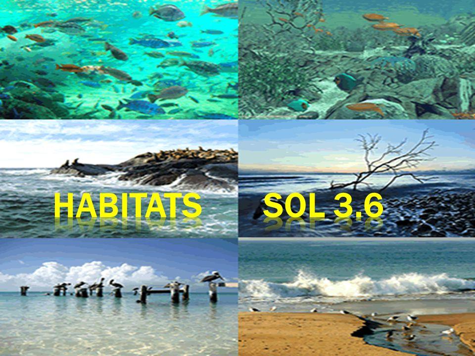 Habitats SOL 3.6