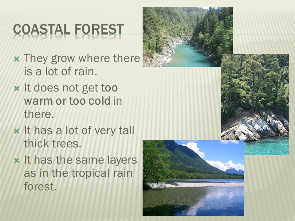 Coastal Forest They grow where there is a lot of rain.