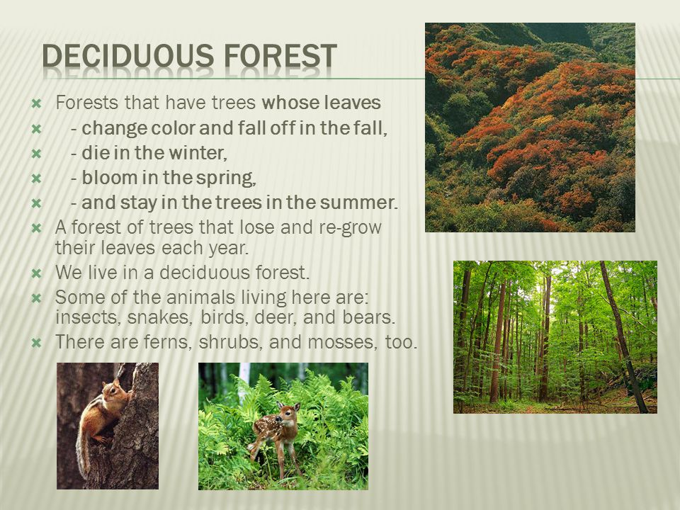 Deciduous forest Forests that have trees whose leaves