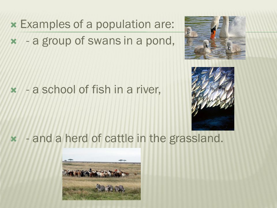 Examples of a population are: