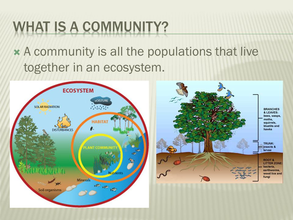 What is a community A community is all the populations that live together in an ecosystem.