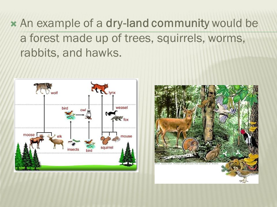 An example of a dry-land community would be a forest made up of trees, squirrels, worms, rabbits, and hawks.