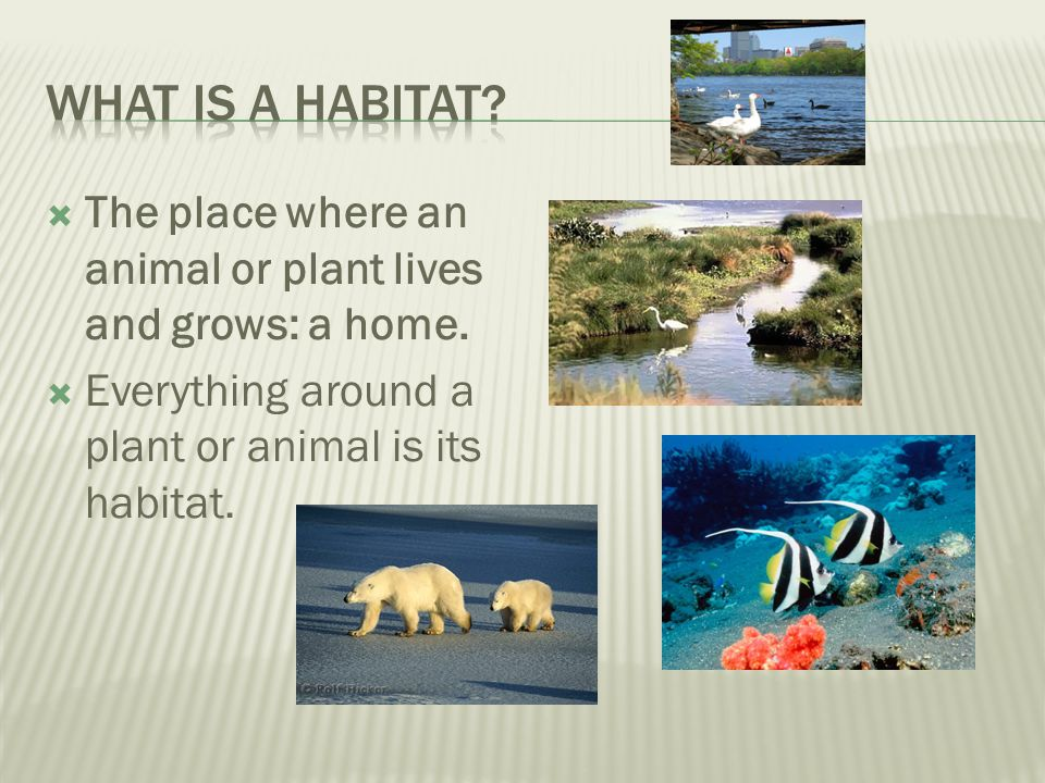 What is a habitat. The place where an animal or plant lives and grows: a home.