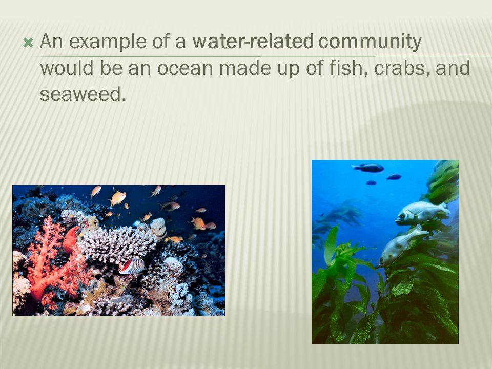 An example of a water-related community would be an ocean made up of fish, crabs, and seaweed.