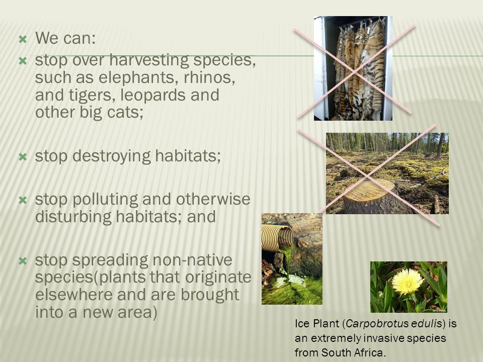stop destroying habitats;