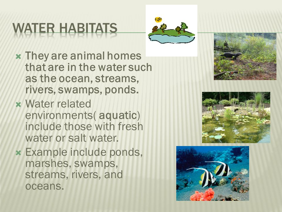 Water habitats They are animal homes that are in the water such as the ocean, streams, rivers, swamps, ponds.
