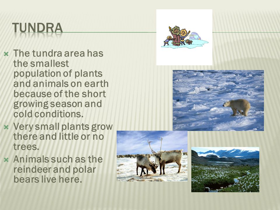 Tundra The tundra area has the smallest population of plants and animals on earth because of the short growing season and cold conditions.