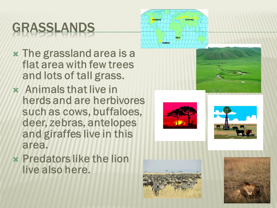 Grasslands The grassland area is a flat area with few trees and lots of tall grass.