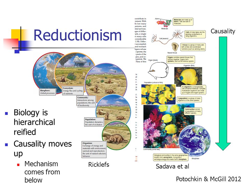 Reductionism Biology is hierarchical reified Causality moves up