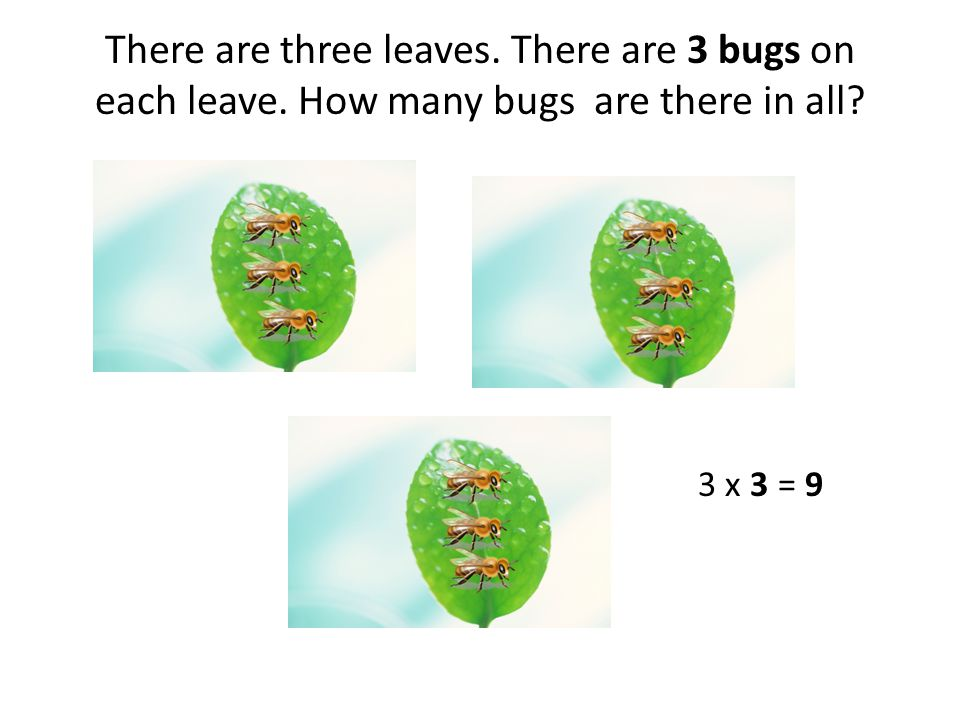 There are three leaves. There are 3 bugs on each leave