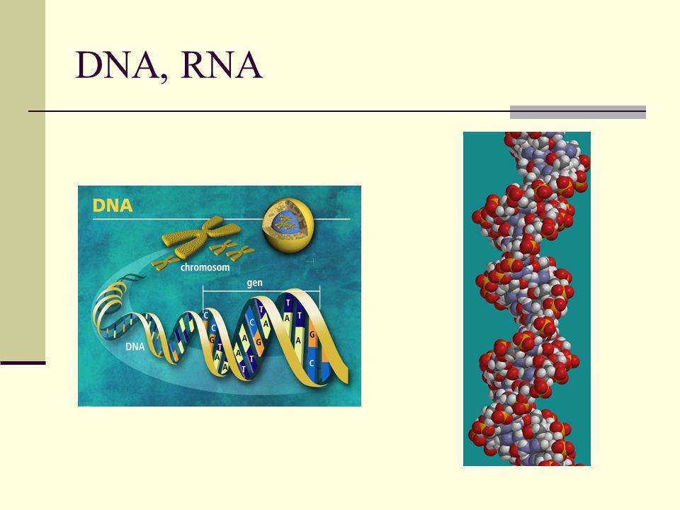 DNA, RNA