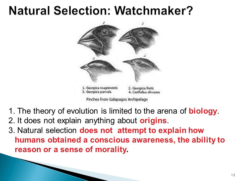 Natural Selection: Watchmaker
