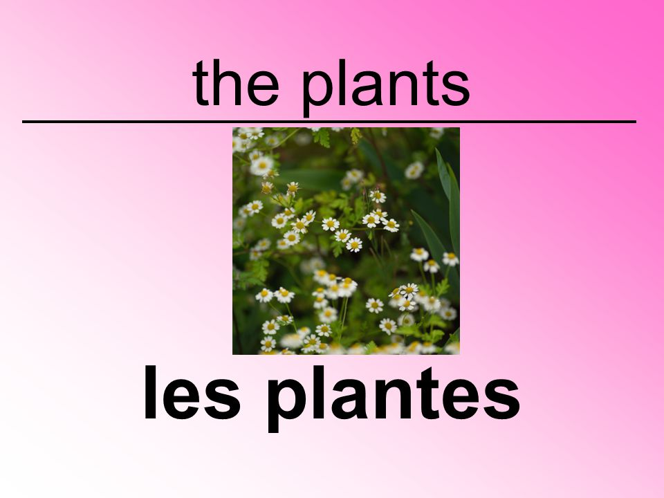 the plants les plantes