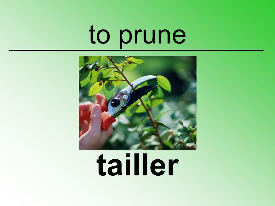 to prune tailler