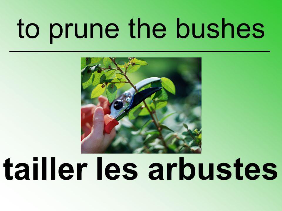 to prune the bushes tailler les arbustes