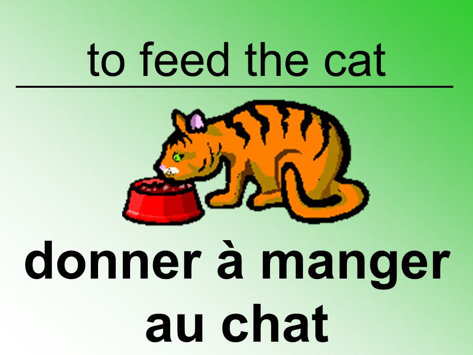 to feed the cat donner à manger au chat